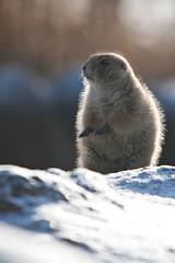6554 (Arie van Tilborg) Tags: winter zoo blijdorp wintertuin dierentuin blijdorpzoo diergaarde rotterdamzoo arievantilborg