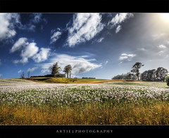 The Field of Poppies, Tasmania :: HDR (:: Artie | Photography :: Offline for 3 Months) Tags: hdr poppies field flowers terrrain landscapes greeneries nature trees flora grasses grass canon rebelxti 400d sigmalens wideangle 1020mm handheld 3xp photoshop cs2 photomatix tonemap tonemapping australia tasmania hobart artie