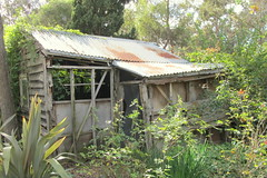 Dollshouse (rpiker101) Tags: artgallery farm shed rusty australia melbourne victoria abandonded artmuseum milking heide bulleen heide1
