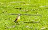 Passarinhar | Parque da Cidade (thaisavaladao) Tags: bird brasil bridwatch brids esquilo naturaleza nature natureza parque parquedacidade passarinhas passarinhos sp verde saopaulo arvores passaros brazil pássaros sãojosédoscampos sãopaulo árvores