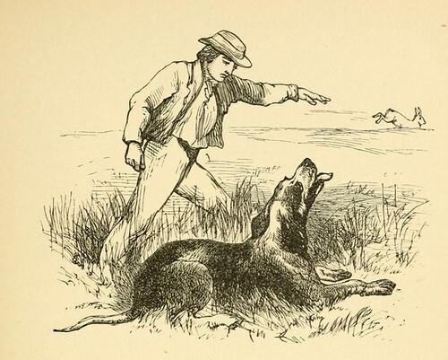 Lepus, Canis et Caprarius