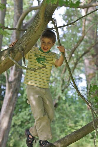 JD Boy Climbing Trees