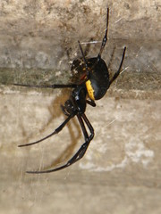 Aranha (Mari Muraoka) Tags: preta aranha