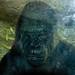 Woodland Park Zoo Seattle 019