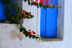 Facade and bougainvillea (Marite2007) Tags: flowers blue windows red colors architecture facade islands wooden intense colorful pretty vibrant blossoms decoration picture hellas vivid greece ornament housing simple picturesque paros cyclades flashy flowery theunforgettablepictures