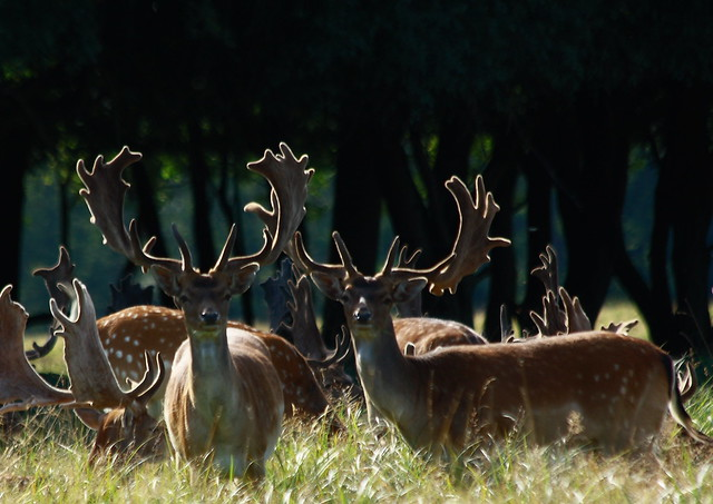 deer me by Tobias gone undercover