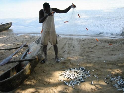 Sardines,Port Orly