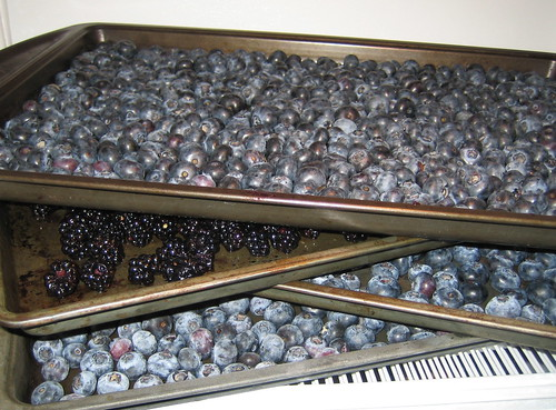 freezing fruit, berries