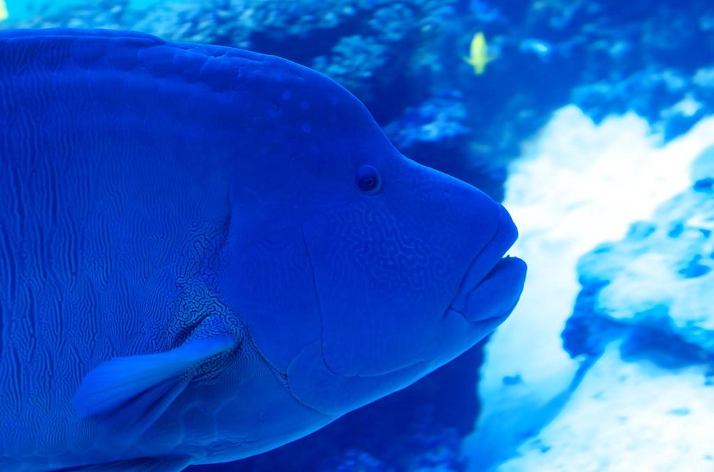 Fish #16