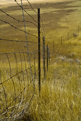 Divided we Fall (williepr08) Tags: grass fence landscapes vanishingpoint pasture poles dimension barbwire