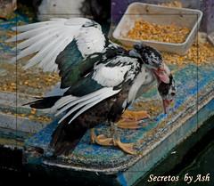 Secretos (Asi75er) Tags: city summer sun bird port photoshop canon puerto eos duck bilbao elements pato bizkaia euskalherria euskadi bilbo basquecountry photoshopelements santurce santurtzi 400d canoneos400d awesomeshotaward