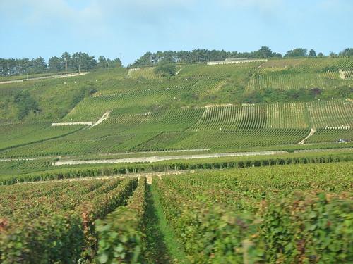 Vineyards by cindy