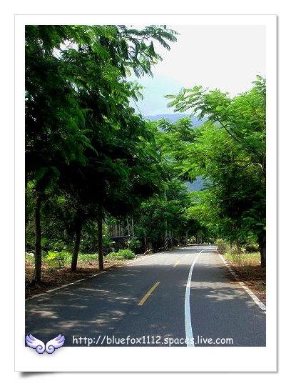 090920-4花宜6輪4日遊_鳳林月廬02_路上的鳳凰木綠色隧道
