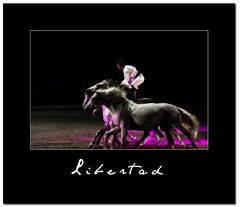 Et aussi libres que le vent (nathaliehupin) Tags: horses cheval chevaux spectacle pignon photographebruxelles nathaliehupin allrightsreservednathaliehupin octobre2009 jeanfranoispignon photographeluxembourg photographehainaut photographenamur photographeliege photographemons photographebelgique wwwnathaliehupinbe wwwnathaliehupingraphismebe