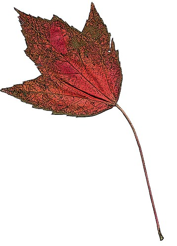 leaf 1 in color