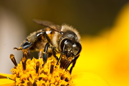 Pollination by ryry9379, on Flickr