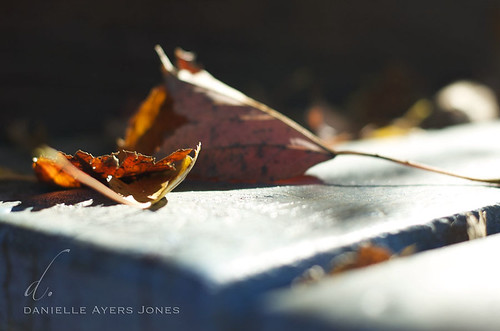 Drifting Leaves by Danielle Ayers Jones