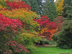 Heaven on Earth!!! (Jehane*) Tags: seattle trees friends usa leaves washington scenery fallcolors autumnleaves soe gmt tistheseason blueribbonwinner washingtonparkarboretum bej fineartphotos golddragon colorphotoaward diamondclassphotographer flickrdiamond elitephotography theperfectphotographer goldstaraward natureselegantshots rubyphotographer jehanesphotography