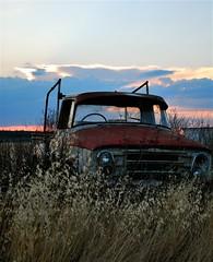 (Ali*Boolala) Tags: life old trip travel abandoned love rural truck weeds nikon oz decay farm happiness australia roadtrip adventure ute forgotten rusted outback aussie ruraldecay brokedown downunder gday d60 narrabri nikond60 empressali
