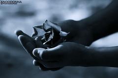 ~ (ANOODONNA) Tags: canon 40d alrasheed alanood   flickrunitedaward anoodonna