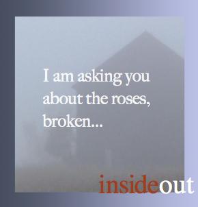 Roses broken