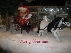 Sleigh ride for Tabby