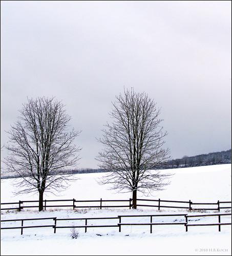 Schnee im Rheingau (beim Hof Armada)