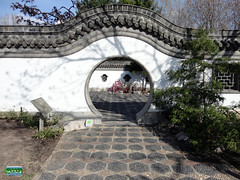 Chinese Garden - The Entrance Courtyard - the Inside gate SC20110511 248 (fotoproze) Tags: canada primavera spring quebec montreal jar printemps tavasz frhling  vr jaro bahar wiosna   gwanwyn forr voorjaar jardinbotaniquedemontreal  kevt proljee 2011    montrealbotanicalgardens  vori musimbunga earrach pomlad primvar    udaberrian maxun  musimsemi