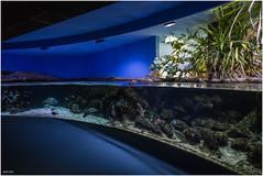 Aquarium (Laurent VETTER) Tags: aquarium poisson la rochelle charente maritime visite france tropical