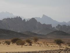 Chad Tibesti NE (ursulazrich) Tags: tschad tchad ciad chad tibesti sahara mountains rocks vegetation flora acacia bushes trees wadi enneri volcanism geologie geology