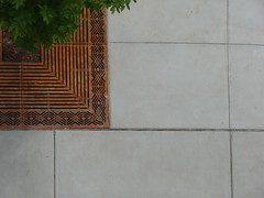 geometry (cougkidd) Tags: tree green leaves grate washington university looking place geometry down sidewalk iorn
