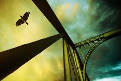 Crow (96dpi) Tags: bridge sky berlin bird silhouette clouds fly border himmel wolken ddr crow brücke potsdam gdr vogel krähe fliegen glienicke grenzübergang glienickerbrücke