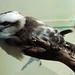 Woodland Park Zoo Seattle 046
