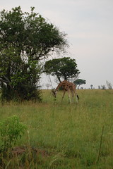 our first giraffe sighting