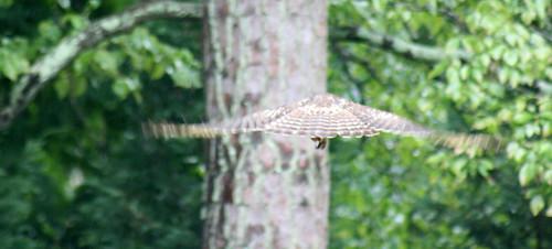 Hawk-<span class=