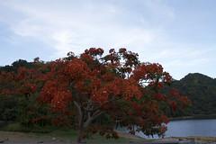 Flamboyan rojo (Gafapastoide) Tags: red lake flower tree nature landscape flamboyan