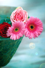 (NouraAlkubaisi.) Tags: birthday pink flowers red happy li friend bokeh sister w h p 3am simple kel edit  pp haya loveyou cacao     3sa    enti my   cacaobutter 3sak   cacaootnaa hayoona3 shayll tb8a n7nn7bbbbbch