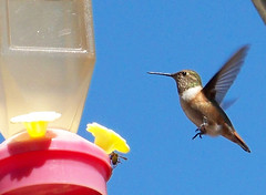The best humming bird shot