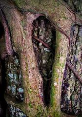 textura natural 01 (Marco Monteiro imagery) Tags: nature sepia natureza tronco