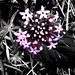 - my garden summer