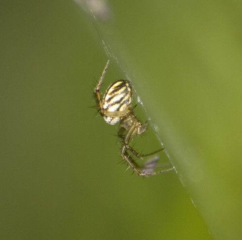 unknown small spider