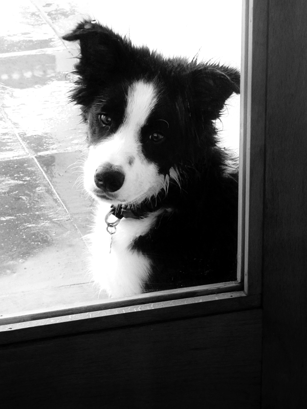 Can I come inside?