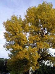 Tree_92309