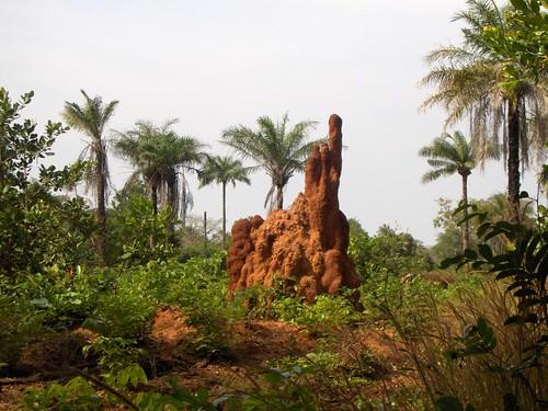 Guiné-Bissau; Actividade dos escuteiros de Porto de Mós na Guiné em 2005
