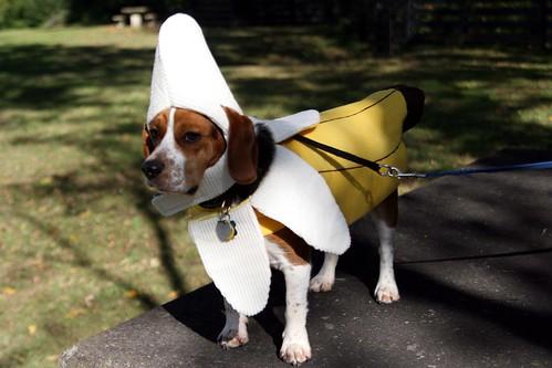 elvis as a banana