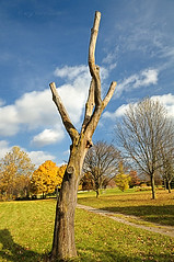 The Naked Tree (KY-Photography) Tags: ca blue autumn light shadow sky ontario canada tree green fall nature yellow clouds landscape nikon colours afternoon ky guelph sunny arboretum nikkor khalid allrightsreserved kal d300 uog nikond300 1685mmf3556gedvr kyphotography