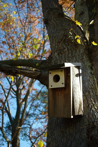 Birdhouse (in your soul?)