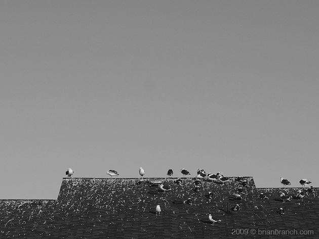 P1060389_gulls