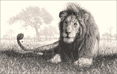 'Lion Country' - Male Lion - Fine Art Pencil Drawings www.drawntonature.co.uk (kjhayler) Tags: pictures wild portrait blackandwhite cats art nature monochrome animals pencil cat portraits print sketch photo artwork artist natural image leo drawing wildlife arts lion picture illustrations drawings images naturalhistory bigcat photograph artists lions prints sketches leos lioness bigcats predators animalart wildcats wildanimals animalprints lionphotos lionphoto pencildrawings wildlifeimages drawingpictures animalpictures wildlifeart animalscats africanwildlife africananimals wildlifephotography wildlifephotos animalphotos animaldrawings wildlifeartists naturepictures malelions wildlifeportraits wildpictures animalspictures animalslions lionpictures picturesoflions openedition wildlifeartist wildlifedrawings drawingphotographs kevinhayler lionspictures lionprints lionimages pictureslions