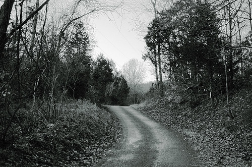 Forest road, at Rockwoods Reservation, in Saint Louis County, Missouri, USA